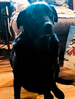 Davis' dog Bloo