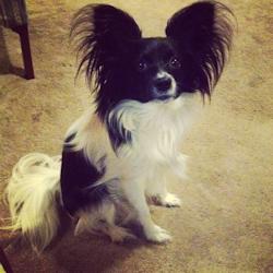 Davis' deceased dog Toby