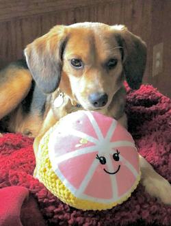 Davis' dog Daisy