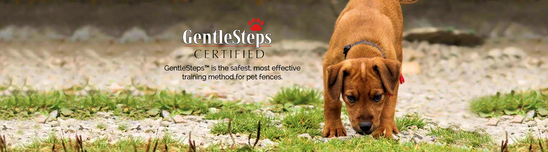 Dog sniffing grass with GentleSteps information